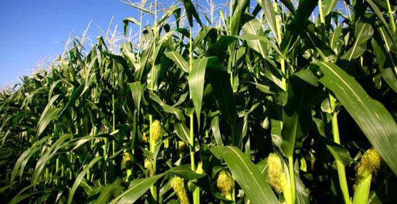 Jonathan Moyo Fears Losing His Farm To Govt