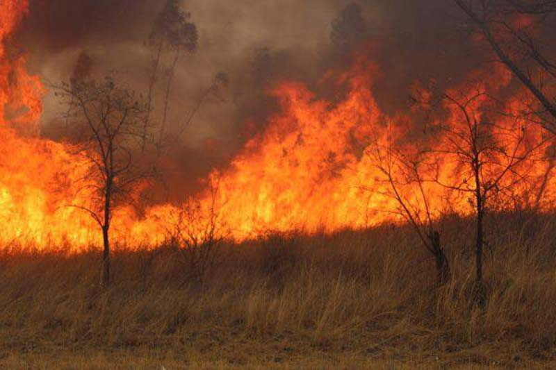 77-year-old Man Burnt To Death By Wildfires