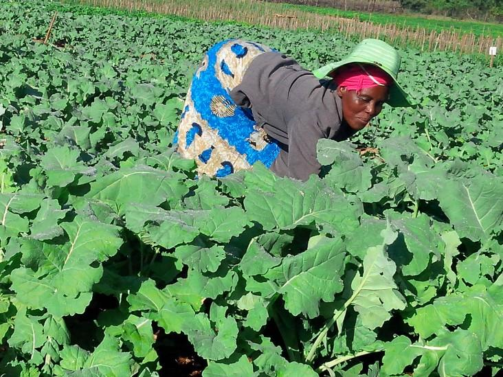 Vegetables Garden Mbare musika fruits prices