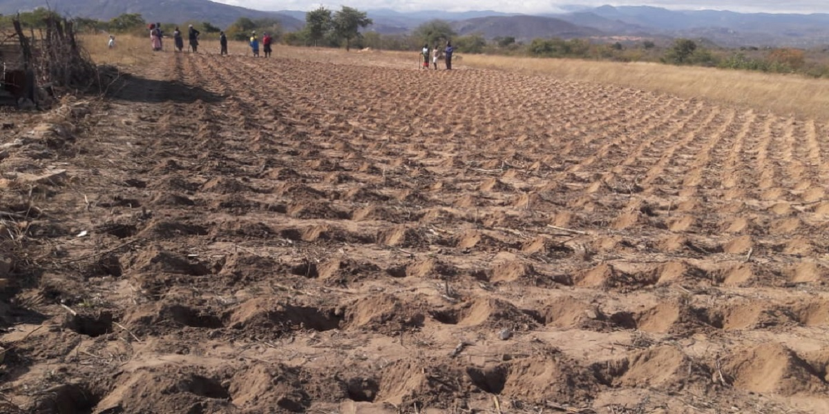 Zimbabwe's Pvumvudza, an agriculture concept has been criticised by some.