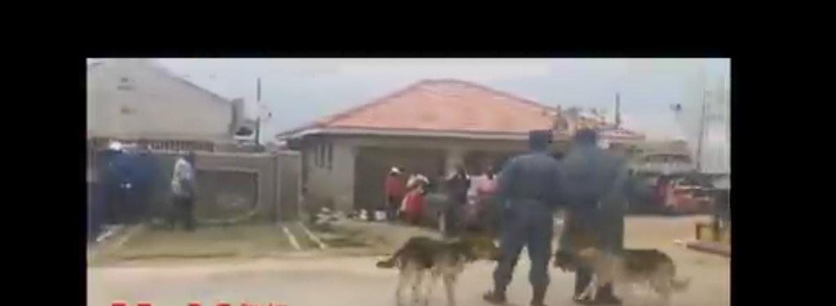 Sniffer Dogs ZRP