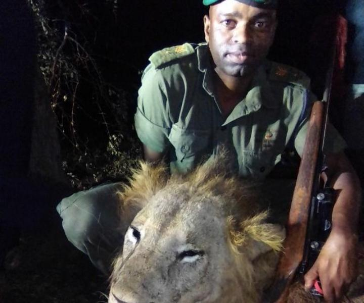 Stray lion killed in Triangle