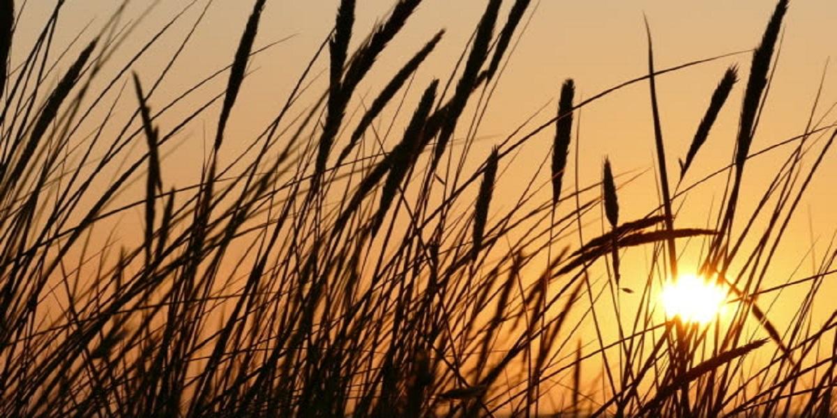 Light breeze sunny weather Zimbabwe sunset forecast